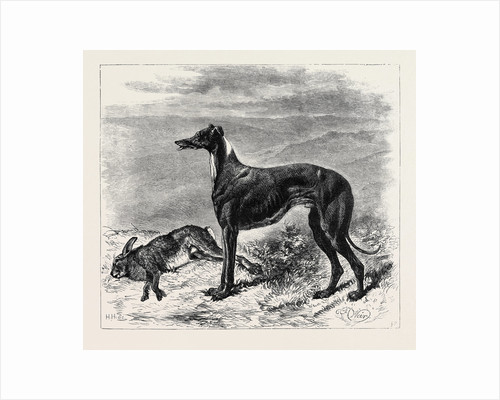 Coursing: Master M'Grath, 1870 by Anonymous