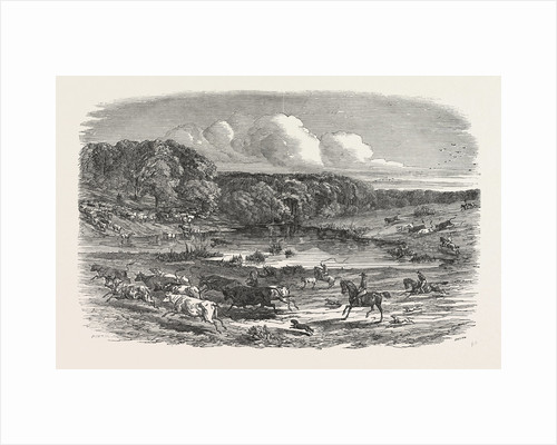 Cattle Mustering in Australia, 1850 by Anonymous
