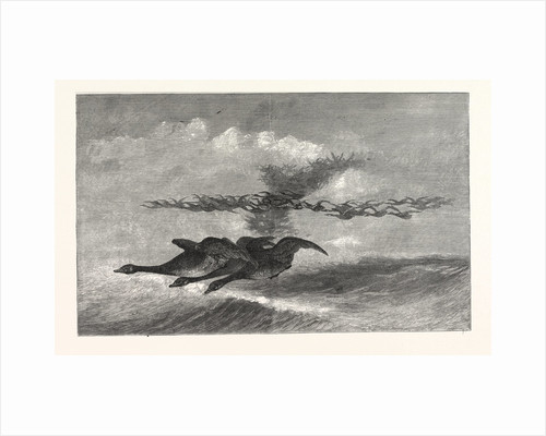 Wild-Goose., America by Anonymous