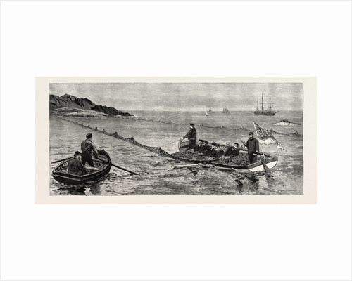 The Newfoundland Fisheries Question: British Man of War Removing and Confiscating Newfoundland Salmon Net, Leaving French Net Untouched, Canada by Anonymous