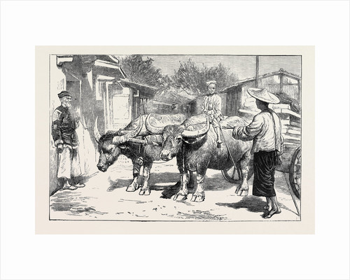 Life in China: A Chinese Buffalo Cart by Anonymous