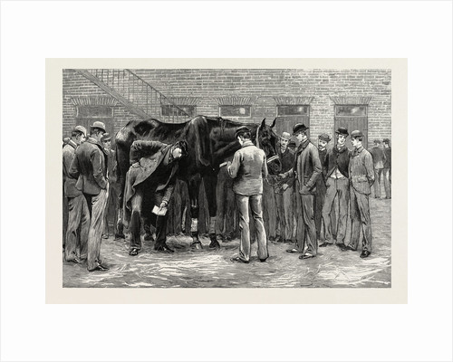The Centenary of the Royal Veterinary College, Camden Town: Students at Work Under the Direction of S Professor. Free-Practice; Sounding His Lungs by Anonymous