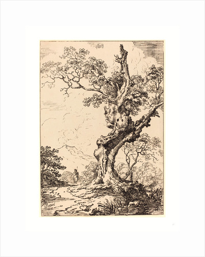 Study of an Old Oak Tree by Anonymous