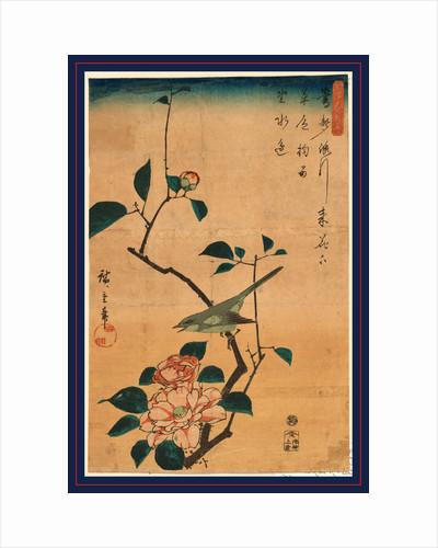 Tsubaki ni uguisu, Camellia and Bush Warbler by Ando Hiroshige