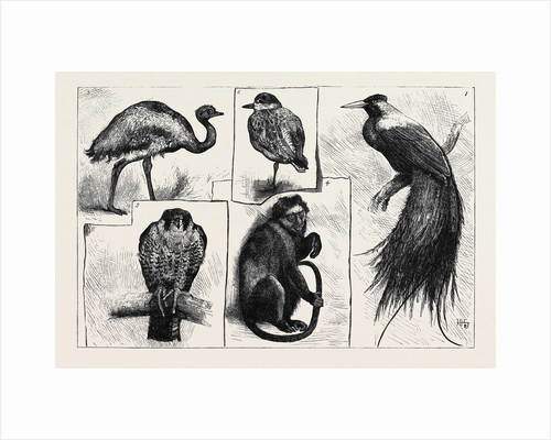 Animals at the Zoological Gardens by Anonymous