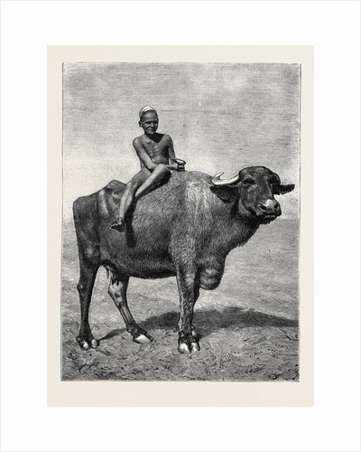 Egypt: A Buffalo and His Driver by Anonymous