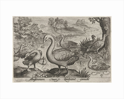 Swan and geese and ducks near to water by Nicolaes de Bruyn