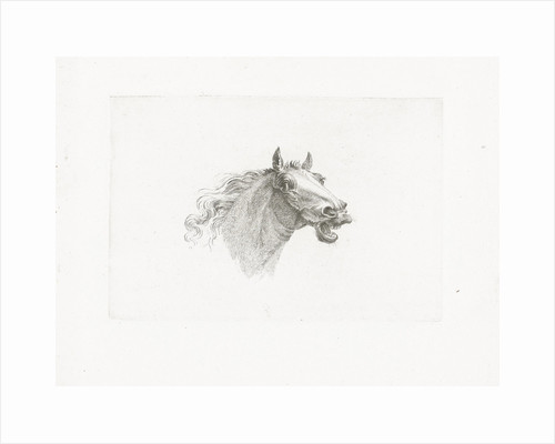 Horse head with open mouth, right by Gerrit Malleyn