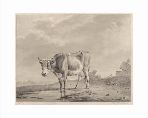 Drinking cow at the water by Diederik Jan Singendonck