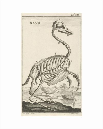 Skeleton of a goose by Jan Claesz ten Hoorn