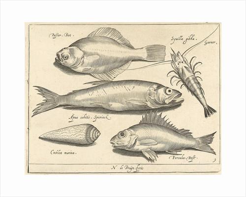 Shrimp and eel by Nicolaes de Bruyn