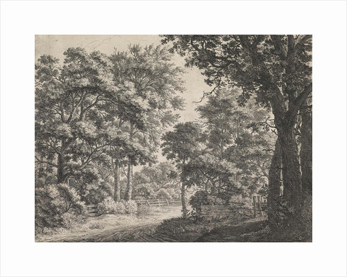 Large trees on either side of a path by Anthonie Waterloo
