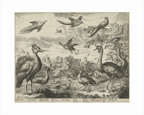 Several birds in a landscape by Francis Barlow