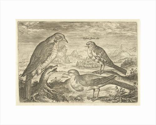 Three birds in a landscape by Adriaen Collaert
