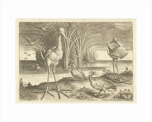 Some waterfowl on a shore by Adriaen Collaert