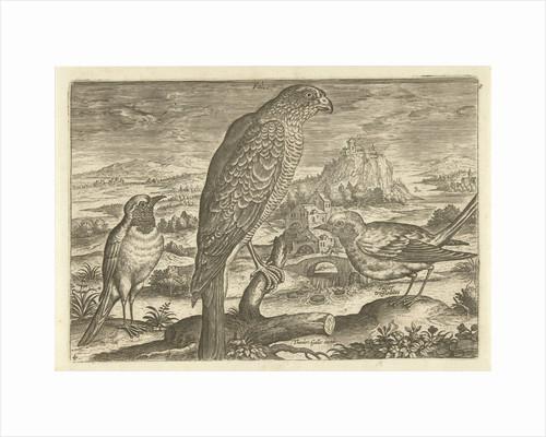 Some birds in a landscape by Adriaen Collaert