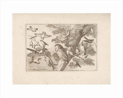 Owl and other birds in a tree by Pieter Schenk I