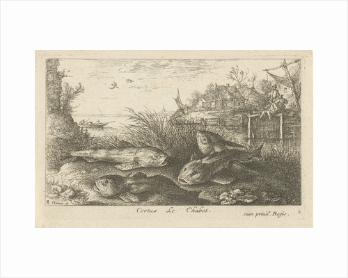 Chub, Squalius cephalus on a riverbank by Jacques van Merlen