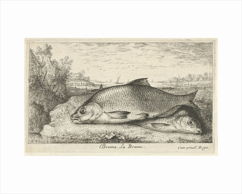 Two bream on a riverbank by Lodewijk XIV