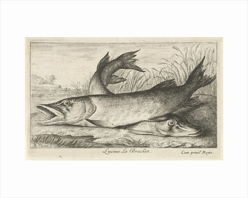 Two pike on a riverbank by Louis XIV King of France