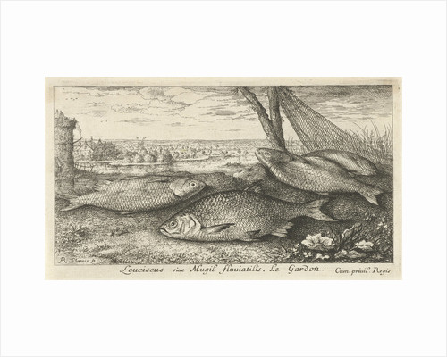 Four roaches and a fishing net by Louis XIV King of France