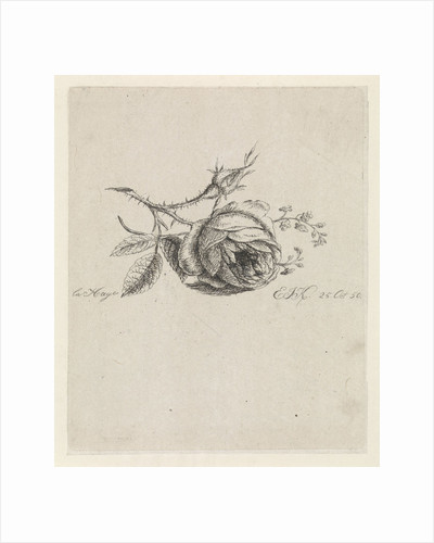 A rose and forget-me-nots by Elisabeth Johanna Koning