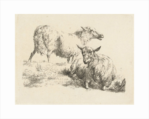 Lying sheep with halter and a standing sheep by Anonymous