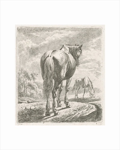 A horse is seen obliquely from behind, In the background a grazing horse by Johannes Mock
