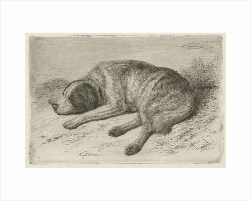 Sleeping dog left by Johannes Mock