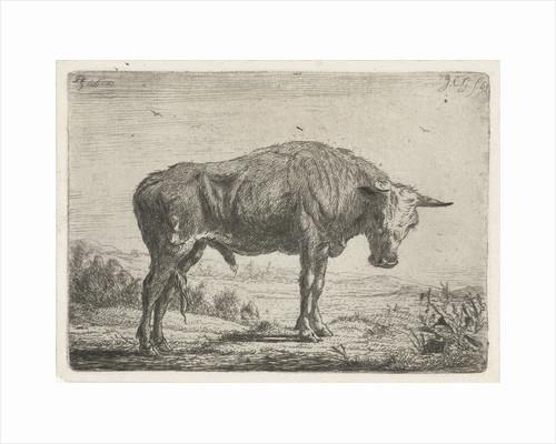 Standing bull by Jacobus Cornelis Gaal