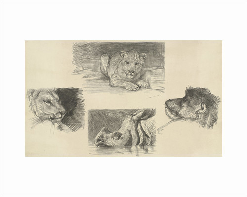 Reclining lion, monkey face, rhino, lion by August Allebé