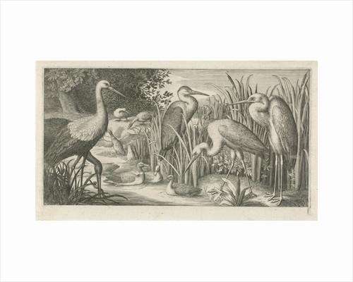 Storks and ducks at a pond by Jan van Londerseel