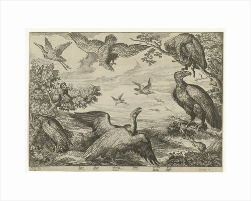 Various birds and a monkey by Edward Cooper