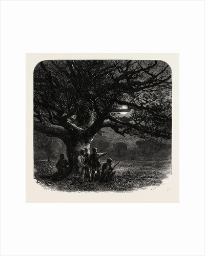 Windsor: The Watch Oak by Anonymous