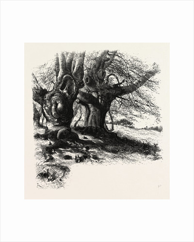 The Forest Scenery of Great Britain: Burnham Beeches by Anonymous