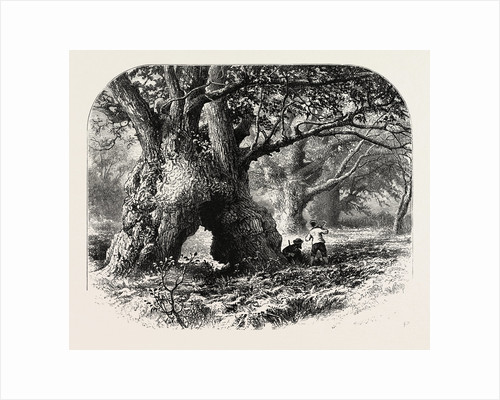 The Forest Scenery of Great Britain: Oaks in Needwood Forest by Anonymous