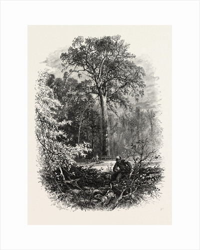 The Forest Scenery of Great Britain: The Victoria Oak, Windsor Forest by Anonymous
