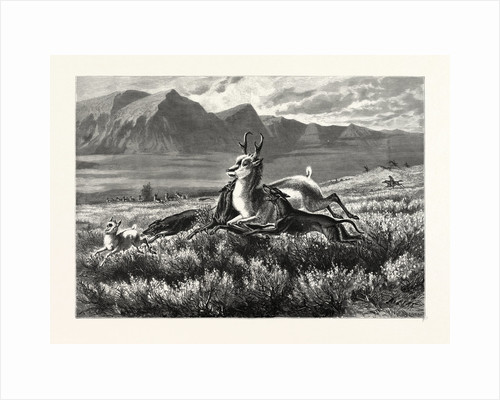 Antelope-Hunting on the Plains. W.M. Cary by Anonymous