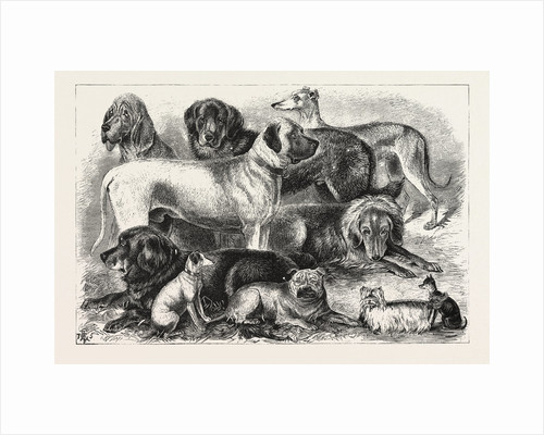 Prize Winners at the Alexandra Palace Dog Show, 1876, London by Anonymous