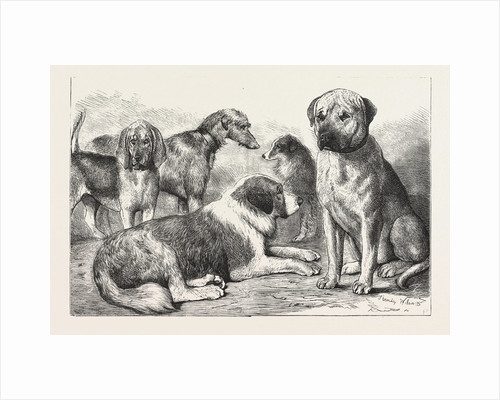 Winners at the Dog Show of the Kennel Club by Anonymous
