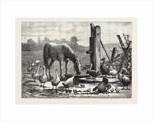 A Fashionable Watering Place. Horse, Geese, Chicken, Outdoor, Farm by Anonymous