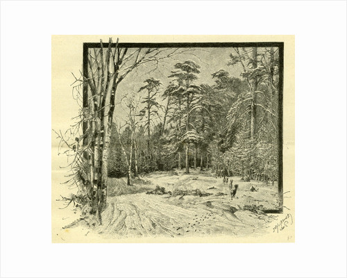 Woods Austria 1891 by Anonymous