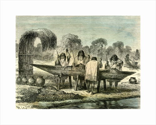 Oil Production of Turtle Eggs by Conibos 1869 Peru by Anonymous