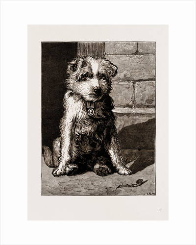Regimental Pets: Pokeno, Dog Of The 50th Regiment by Anonymous