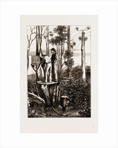 The Recent Transit Of Venus: Preparing For Work At An Australian Bush Station, 1875 by Anonymous