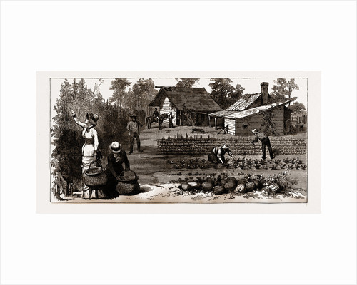 The English Garden, Scenes In Rugby, The English Colony In Tennesse, 1880, USA by Anonymous