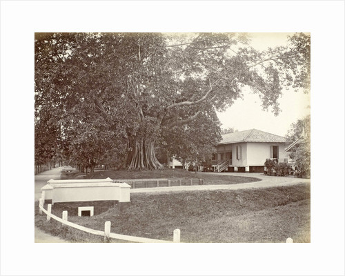 Driveway to a villa in the Dutch East Indies by Anonymous