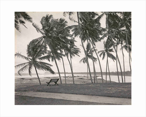 Ceylon in Colombo beach with palm trees and bench, Sri Lanka by A.W Plate & Co.