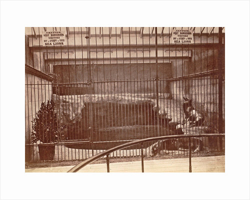 Lattice cage with lions and warning signs in the aquarium Brighton UK by Anonymous