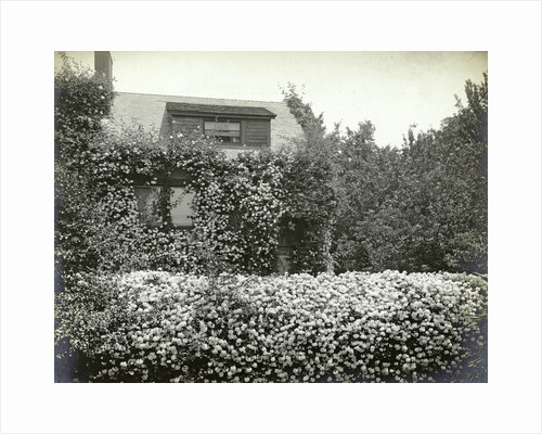 Garden and house overgrown with roses by Anonymous